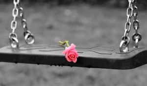 pink rose laying on empty woodens swing seat